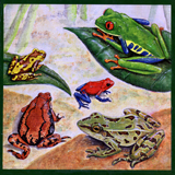 Frogs of Costa Rica