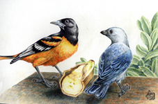 Oriole and Tanager